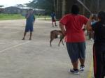Goat briefly stops play in village volleyball